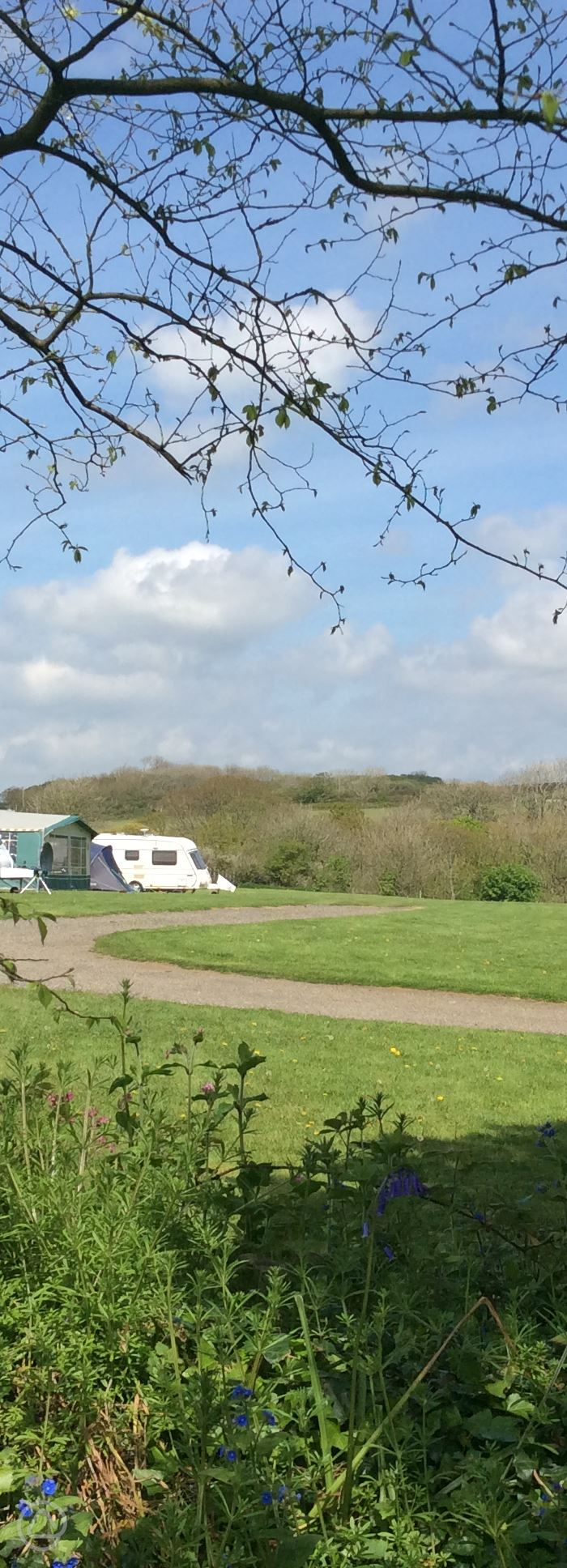 Dog Friendly Campsites In Cornwall