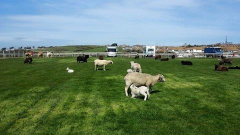 Martleaves Farm Campsite in Weymouth, Dorset