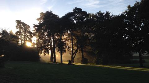 Tree Magic at Happy Valley Norfolk