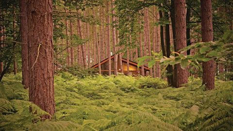 Sherwood Forest Camping >> Sherwood Forest Lodges In Edwinstowe Nottinghamshire