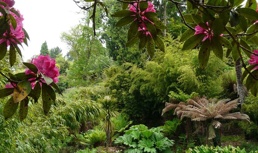 3 must see gardens in cornwall for Gardening jobs cornwall