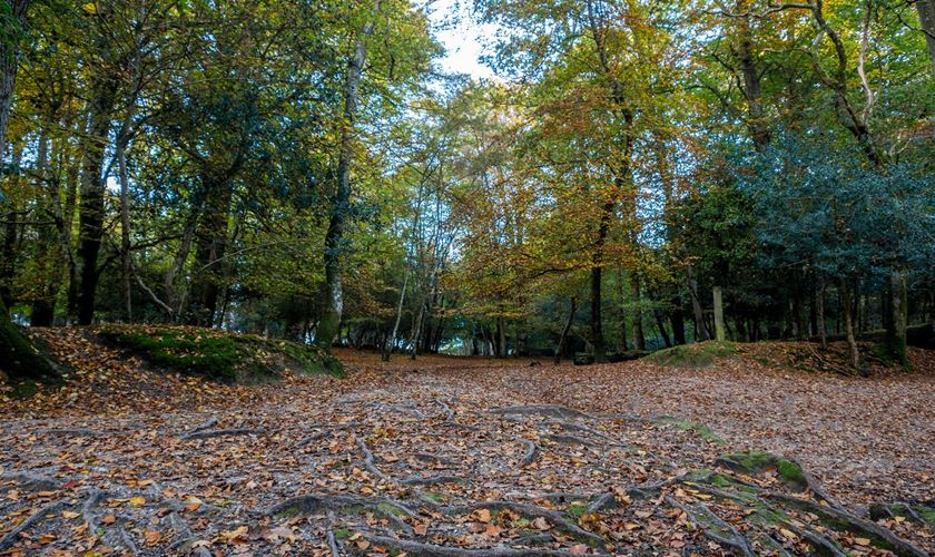7 Unusual Things To Do In The New Forest