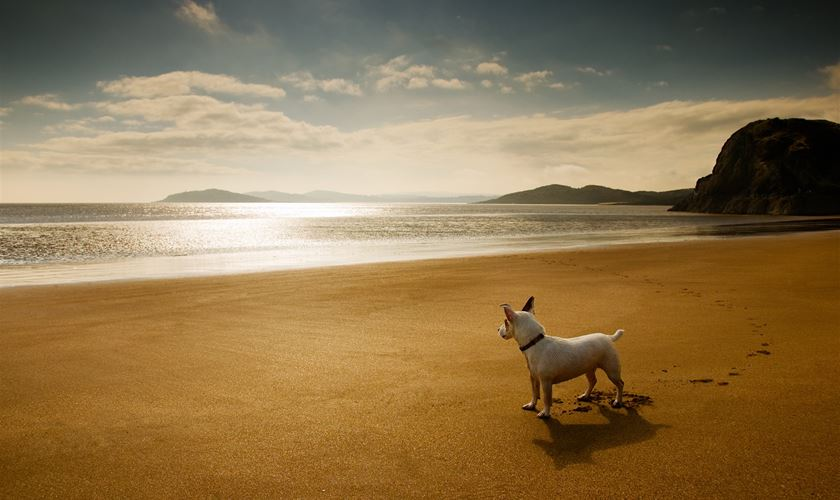 Holidays with dogs: What you need to consider