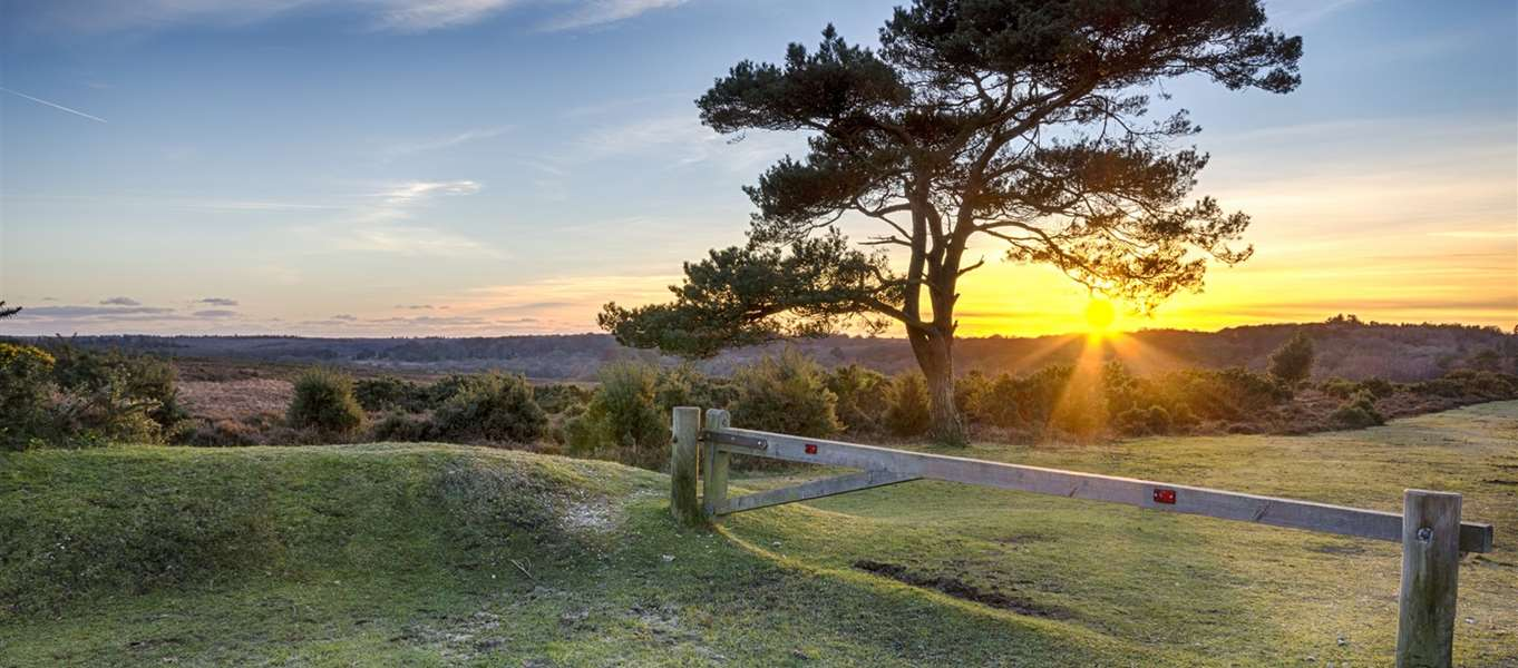 New Forest Campsites Map 40+ campsites in the New Forest   the park's best camping sites